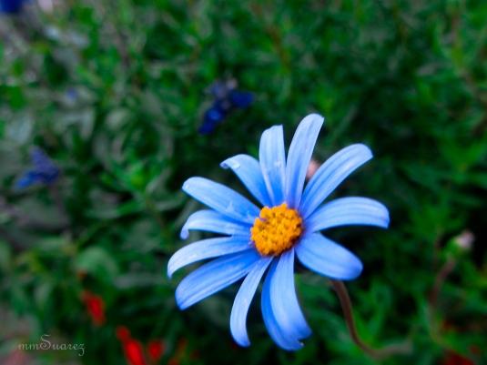 sflower2012-48a