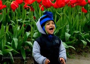 tulip-45a