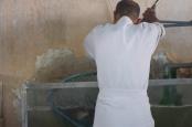 fishing in the aquarium