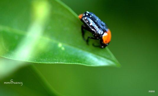 a bug6