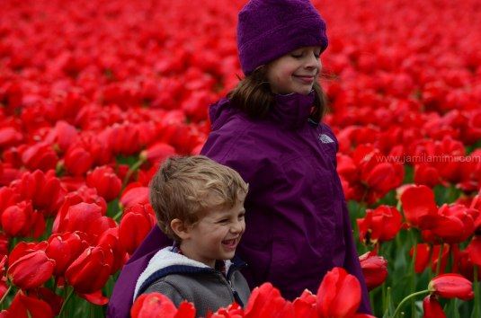 tulips-1787